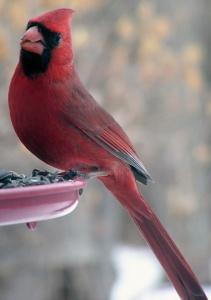 bird-feeder-600