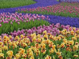 flowers-for-gardens