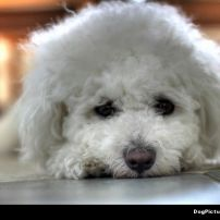 Dog_Picture_210