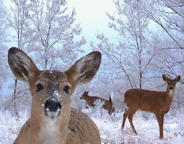 winter-wonderland-bill-stephens