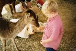 Will petting zoo