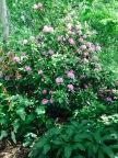 Pink Flower Bush Gardens