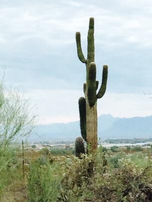 dad cactus front yard