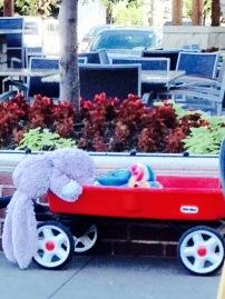 kaldi's rabbit in wagon