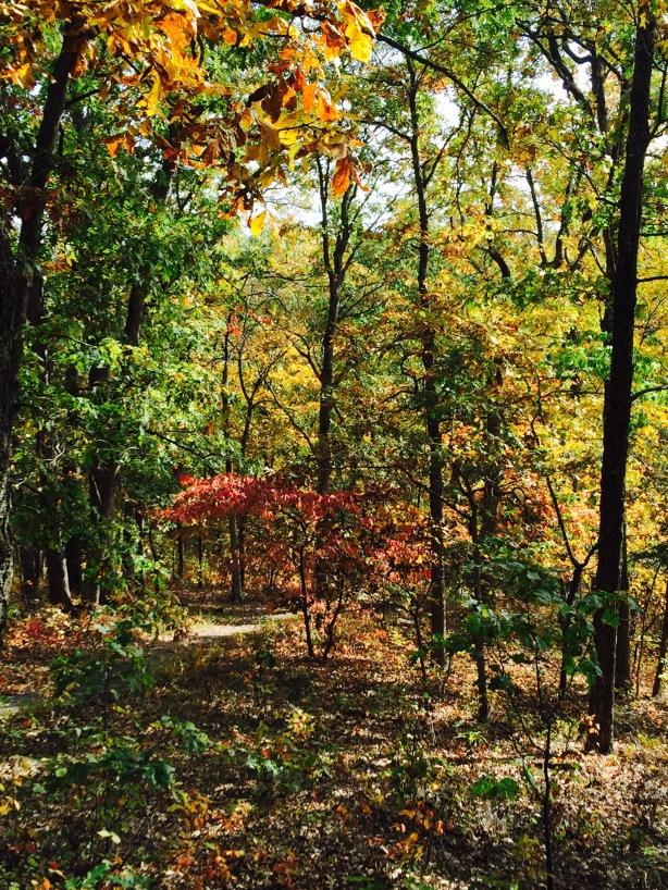 fall colors forest