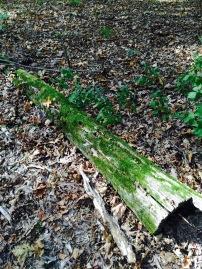fall green moss covered log