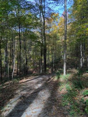 fall tree trunks shadows