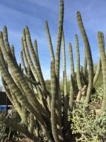 desertbunch