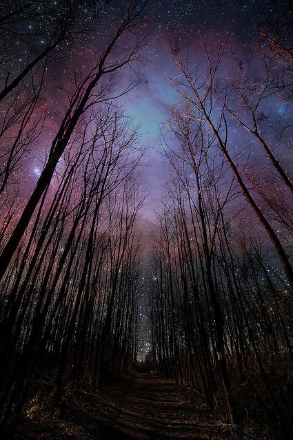 starstrees