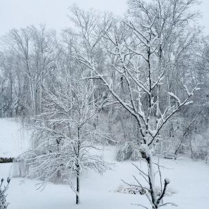 winter trees3