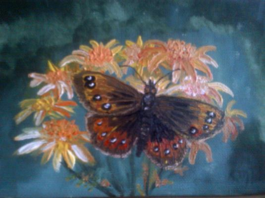 Butterfly in oils