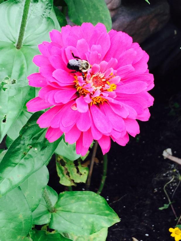 flower bee botanical