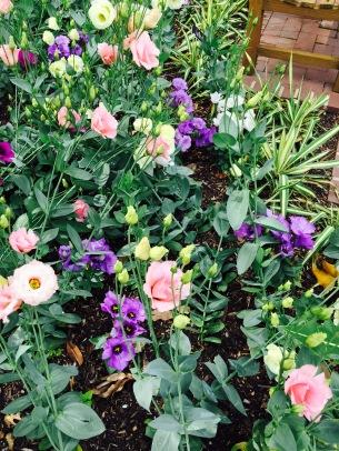 flower mixture botanical zoom