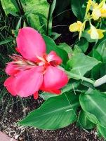 flower pink botanical zoom