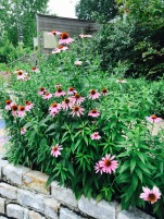 Flower purple coneflower wall bontanical