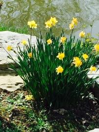 park daffodill