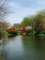 park pond flowered trees