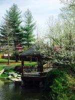 park trees2