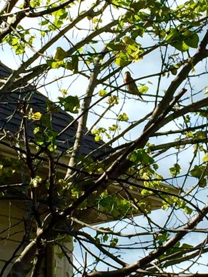bluebirdtree