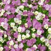 flowersmay11