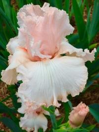 flowersmay1