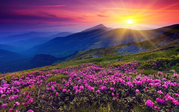 flowermeadowawesome