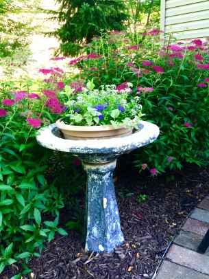 flowers birdbath