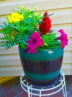 Flowers teal pot