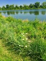 Lake New Home1