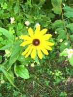yellownewhome