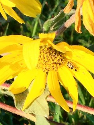 lakeflowerwithbee