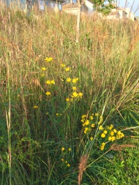 lakegrasses2