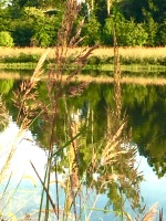 lakewithcattails