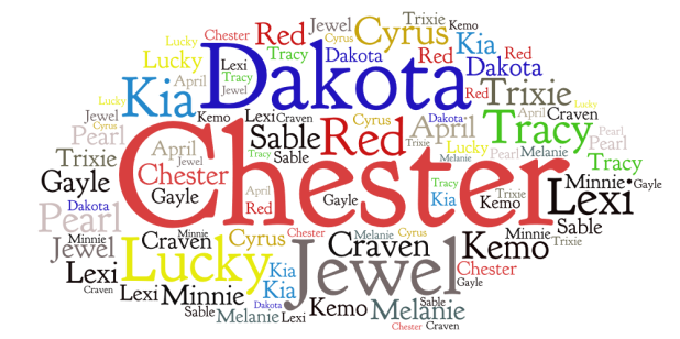pets-word-cloud